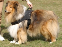 Next Nylon multi-purpose dog harness for tracking/pulling Collie larger image Nylon multi-purpose dog harness for tracking/pulli