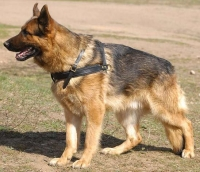 German Shepherd Working Dog Pulling Harness of Genuine Leather