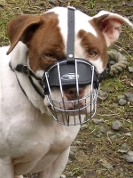 *Yogi wearing our exclusive Wire Basket Dog Muzzles Size Chart -American Staffordshire Terrier  muzzle ;M4
