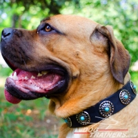 Gorgeous Wide Tan Leather Dog Collar - Fashion Exclusive Design