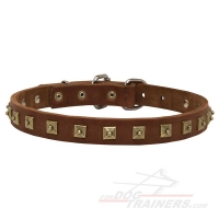 Gorgeous Leather Dog Collar with Square Brass Plated Studs