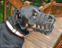 *Madison happy with her Everyday Light Weight Super Ventilation Rottweiler muzzle - product code   M41