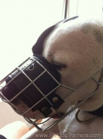 *Max wearing our exclusive NEW Pitbull Revolution Design Wire Dog Muzzle - M9-1