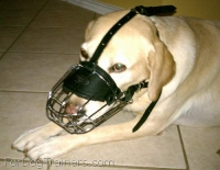 *Duke Labrador looks amazing in our Basket Wire Dog Muzzle Light - M4light