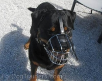 *Ares loves new Basket Dog Muzzle (All Sizes)