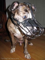 Gorgeous *Charlie wearing our Wire Basket Dog Muzzles - M4light