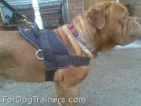 *Spartion got exited when he received - All Weather Extra Strong Nylon Harness - H6