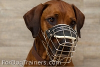 *Maya is fancy in new Revolution Design Dog Muzzle - M9