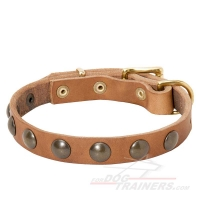 Studded Leather Dog Collar for Puppies and Small Breeds