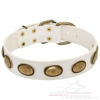 White Leather Dog Collar with Brass Plates for Walking