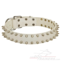 """White Rose"" Leather Dog Collar with Nickel Plated Spikes for Walking"