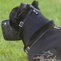 Cane Corso Dog Attack Training Leather Muzzle