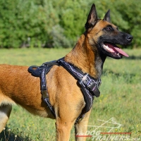 Malinois Handcrafted Leather Dog Harness with Barbed Wire Design
