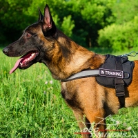 Malinois Multifunctional Nylon Harness with Reflective Strap
