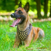 Malinois Studded Leather Dog Harness for Walking and Training