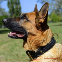 Working German Shepherd Braided Leather Dog Collar