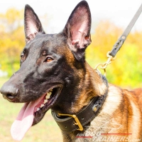 Luxurious Malinois Braided Leather Collar