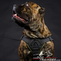 Brand New Multifunctional Cane Corso Nylon Harness