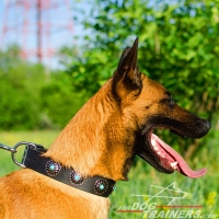 Royal Malinois Wide Leather Dog Collar with Blue Stones