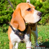 Tracking / Walking Leather Beagle Harness with Medallion in the Center