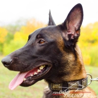 Malinois Impressive War-like Leather Collar with Plates