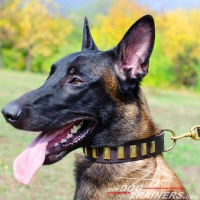 Malinois Magnificent Leather Collar for Walking and Training