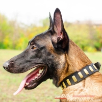 Gorgeous Wide Plated Leather Belgian Malinois Collar