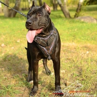 Leather Pitbull Harness for Attack Training with Barbed Wire Painting