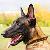 Malinois Multipurpose Leather Collar with Spikes