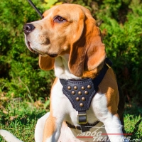 Designer Leather Beagle Harness with Adjustable Straps for Puppy Walking and Training