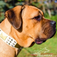 White Leather Cane Corso Collar with Plates and Spikes