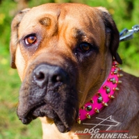 Bright Pink Spiked and Studded Leather Cane Corso Collar