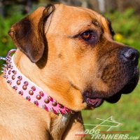 Pink Leather Cane Corso Collar with 2 Rows of Spikes +1 Row of Old Brass Small Studs