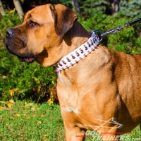 Brass Studded and Nickel Spiked White Leather Cane Corso Collar