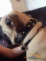 Royal Design Leather Collar for Royal Canine - Mastiff Nappa Padded Collar