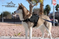 Husky Presents Multifunctional Dog Harness of Water-proof Nylon - Top Seller Product