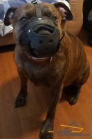 Dog is Ready for Training in Comfortable Padded  Leather Muzzle