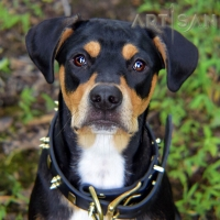 *Klyde Looking So Cool in FDT Artisan Spiked Leather Dog Collar