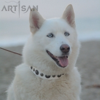 *Aika Wearing Handmade *White Leather Dog Collar from FDT Artisan Design