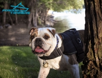 *Dash Looking Fabulous in Multifunctional Nylon Harness