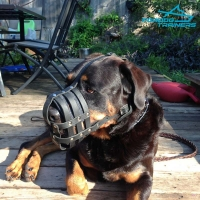 Strong *Diesel Wearing  Leather Rottweiler  Basket Muzzle with Supreme Ventilation