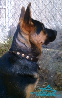 Allie Shows off Handcrafted Leather Dog Collar for German Shepherd Breed