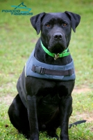 Warm  Nylon Vest Labrador Harness for Any Weather Walking