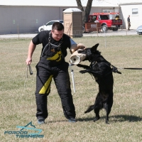 *Naika Trains in Leather Dog Harness for Black German Shepherds