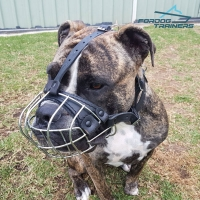 *Wellington in His Wire Cage Dog Muzzle Super Ventilation for Everyday Use