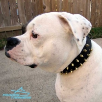 Spiked Leather American Bulldog Collar Matches *Mara Perfectly