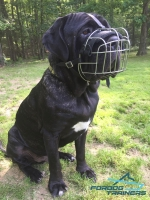 *Fang in His Wire Cage Bermastiff  Muzzle with Soft Felt Padding
