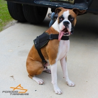 *Diesel Presents Adjustable Nylon Boxer Dog Harness for Any Weather Training and Walking