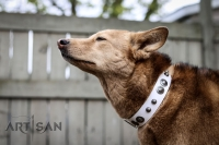 *Zyla in Handcrafted  White Leather Dog CollarDuring Daily Walk