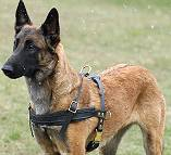 Tracking / Pulling / Agitation Leather Dog Harness For Malinois H5